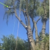 MrTree Care - Tree Removal,  Trimming - Обрезка и вырубка деревьев